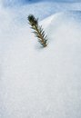 Top of a conifer in the snow look out cover Royalty Free Stock Photo