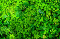 Top down view of lush vegitation a close up green forest undergrowth various plants leaves and species Royalty Free Stock Image