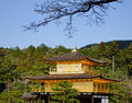 Top of the Kinkaku temple with the pine tree forest in Kyoto, Japan Royalty Free Stock Photo