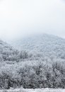 Top of mountains covered with snow-covered pine forest in the fog Stock Photos
