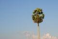 Top of the palm tree in Ninh Binh, Vietnam Royalty Free Stock Photo
