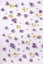 Top view of beautiful lilac and anemone flowers pattern, flat la Royalty Free Stock Photo