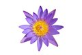 Top view beautiful purple water lily isolated on white background Royalty Free Stock Photo