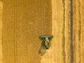 Top view combine harvester gathers the wheat at sunset. Harvesting grain field, crop season Royalty Free Stock Photo