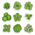 Top view different plants and trees vector set for architectural or landscape design Royalty Free Stock Photo