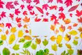 Top view empty rectangular canvas blank on autumn leaves gradient colorful rainbow background on white. Leaf pattern fall colors f Royalty Free Stock Photo