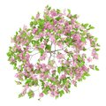 Top view of flowering plum tree isolated on white Royalty Free Stock Photo