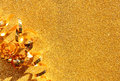 Top view image of curly golden ribbon over textured glitter background. Royalty Free Stock Photo