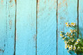 Top view image of daisy flowers on blue wooden table. vintage filtered Royalty Free Stock Photo