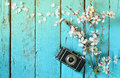 Top view image of spring white cherry blossoms tree next to old camera on blue wooden table Royalty Free Stock Photo