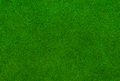 Top view of lush green grass texture Royalty Free Stock Photo