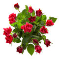 Top view of  red roses bouquet Royalty Free Stock Photos