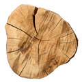 Top view of a tree stump Royalty Free Stock Photo
