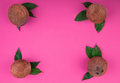 Top view of whole and organic coconuts on a pink background. Hawaiian coconuts with leaves. Set of healthy exotic fruits.