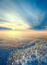 Top view of winter forest Royalty Free Stock Images