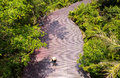 Top view young woman walking on wooden deck in a forest Royalty Free Stock Photo