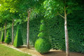 Topiary conical hedges lines from versailles chateau Royalty Free Stock Photography