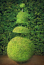 Topiary conical hedges lines from versailles chateau Stock Images