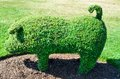 Topiary pig from an english garden a green Royalty Free Stock Photos