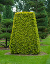 Topiary yew Royalty Free Stock Images