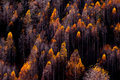 Tops of trees in the forest in autumn Royalty Free Stock Photo