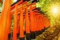 Torii gates Kyoto