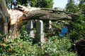 Tornado broken tree in cemetery after a hard storm Stock Photo