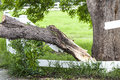 Tornado wreckage damaged tree caused from in larimer country colorado Stock Photo