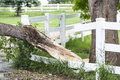 Tornado wreckage damaged tree caused from a in northern colorado Royalty Free Stock Image