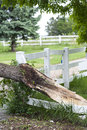 Tornado wreckage damaged tree caused from a in northern colorado Stock Image