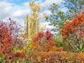 Toronto Lake autumn in Humber Bay Park 2016 Royalty Free Stock Photo