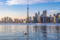 Toronto Skyline and swan swimming on Ontario lake - Toronto, Ontario, Canada Royalty Free Stock Photo