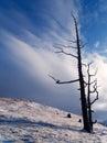 Torr tree Arkivfoton