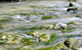 Torrent water flow the of in a with cobblestone and algae Stock Photo