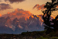 Torres del paine sunrise over with wind blown tree in foreground Royalty Free Stock Image
