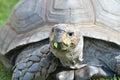 Tortoise Head Royalty Free Stock Photo