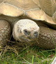Tortoise Sans Hare Royalty Free Stock Images