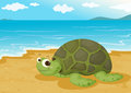 Tortoise on sea shore Stock Photos