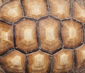 Tortoise shell Royalty Free Stock Photo