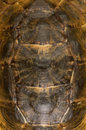 Tortoise shell detail Royalty Free Stock Photo