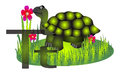Tortoise turtle illustration of two and a isolated on white Royalty Free Stock Images