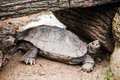 Tortoise under woods Royalty Free Stock Photography