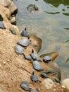 Tortoises Stock Photo