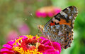 Tortoiseshell Stock Photography