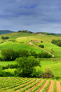 Toscana landscape with long leading road Stock Image