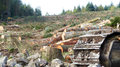 Total destruction trees destroyed by machinery Royalty Free Stock Photos
