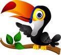 Toucan bird cartoon presenting Stock Images