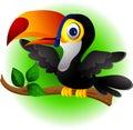 Toucan bird cartoon presenting Stock Photo
