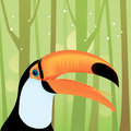 Toucan Bird at The Jungle Stock Images