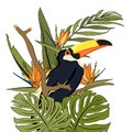 Toucan black bird with yellow beak in natural tropic habitat on tree branch. Exotic tropical forest greenery.